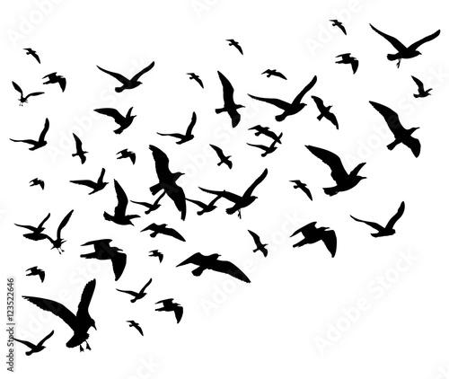 Fototapeta premium Latające ptaki stada wektor ilustracja na białym tle