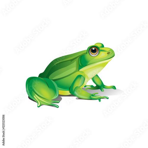 Fototapeta premium całkiem realistyczna żaba