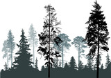 pine grey forest silhouettes isolated on white - 123523623