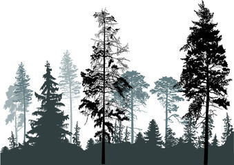 Naklejka pine grey forest silhouettes isolated on white