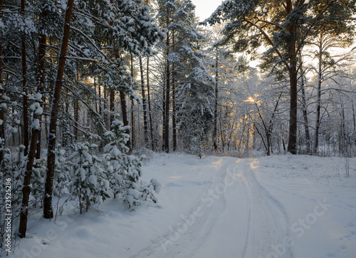 Tuinposter Weg in bos Small country road in winter