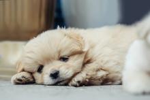 Small Puppy Plush Dog
