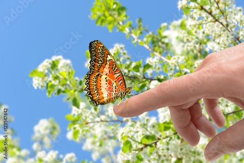 Schmetterling 170 Wallpaper Mural