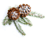 Cones Pine And Branch Christmas Tree On Snow On White Background