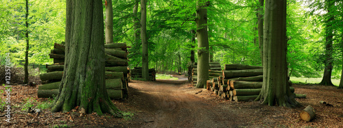 Fototapeten Wald Piles of Lumber along Dirt Road through Green Forest