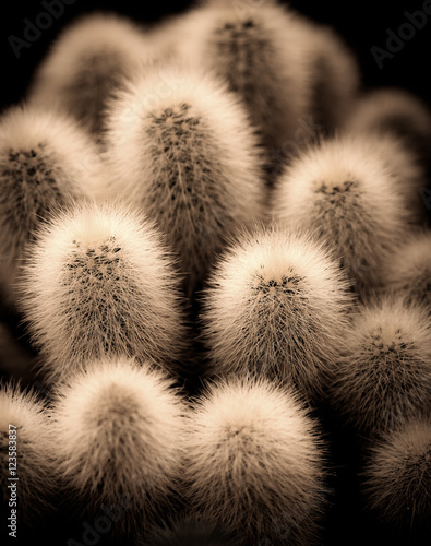 Photo  Close up of Cactus