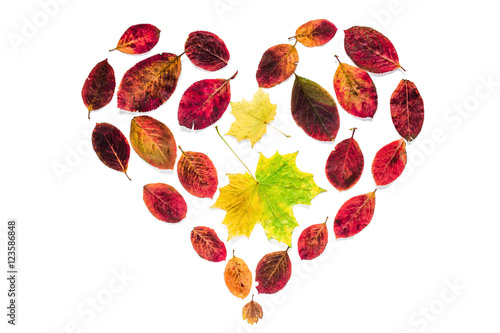 Abstract heart symbol of yellow maple and red leaves isolated on abstract heart symbol of yellow maple and red leaves isolated on white background for blogs m4hsunfo