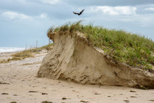 Cape Canaveral Dune - Hurrican...