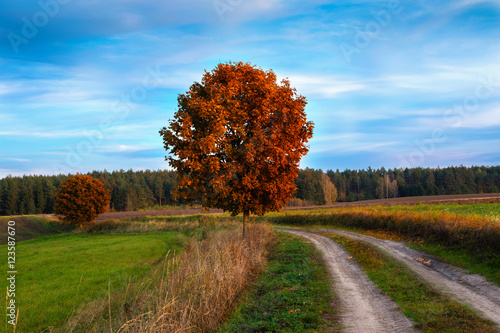 Garden Poster Brown Autumn landscape with country road and red trees. Masuria, Poland.
