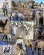 Montage - Animals of Africa and India