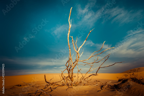 Cadres-photo bureau Bleu vert Desert landscape with dead plants in sand dunes under sunny sky. Global warming concept. Nature background