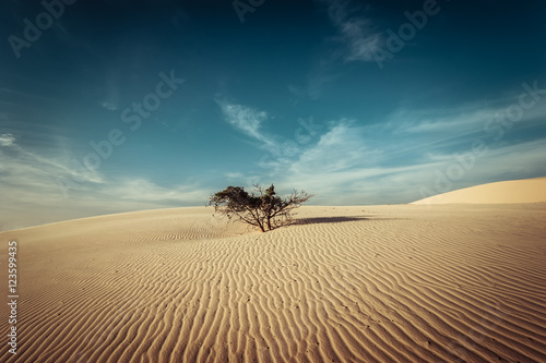 Foto auf AluDibond Wuste Sandig Desert landscape with dead plants in sand dunes under sunny sky. Global warming concept. Nature background