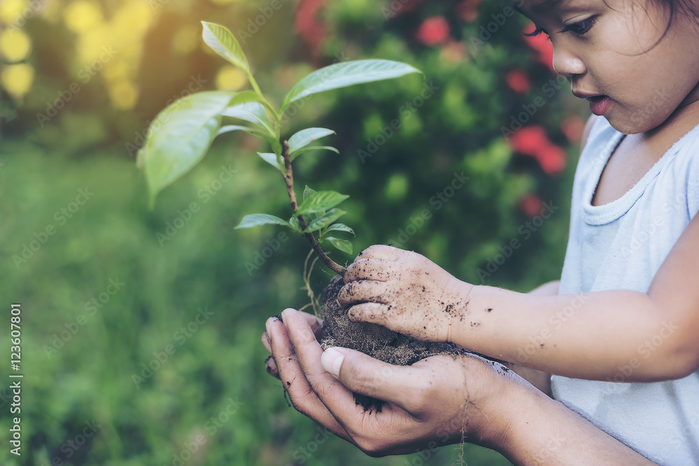 Fototapeta Hands growing a young plant / protect nature and environment con
