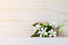 White Flower, Orange Jessamine (Murraya Paniculata)