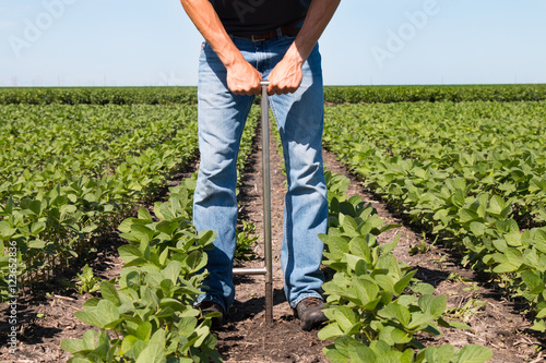 Agronomist Using a Tablet in an Agricultural Field Wallpaper Mural