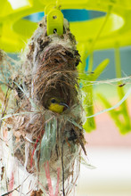 The Yellow Bellied Sunbird Bui...