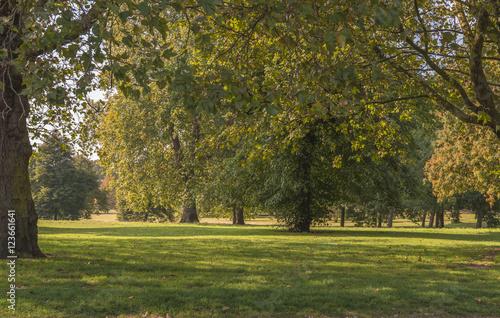 Fototapety, obrazy: Hyde Park in the autumn, London UK