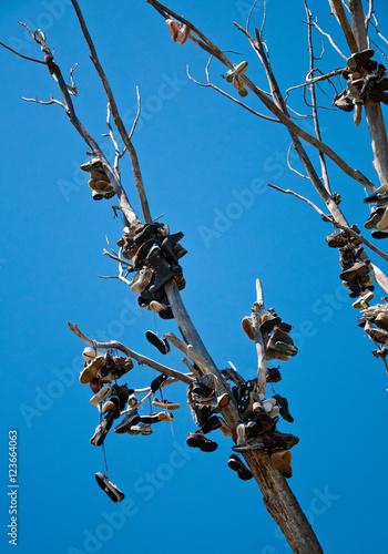 Valokuvatapetti Tree of shoes