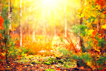 Fototapeta Do sypialni Autumn sunny forest. Blurred abstract nature background