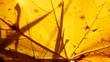 Herbstlaub von Ahorn, Acer