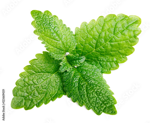 Fresh raw mint or green lemon balm leaves (Melissa officinalis) isolated on white background