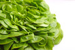 Green lettuce on a white background, selective focus.