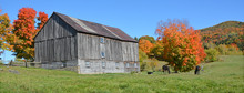 BROMONT QUEBEC CANADA 10 11 2016: Horses Beside An Old Farm In Country Side Of Bromont It Is In The Brome-Missisquoi Regional County Municipality