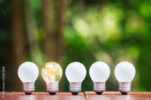 Photo  Bulbs in Forest