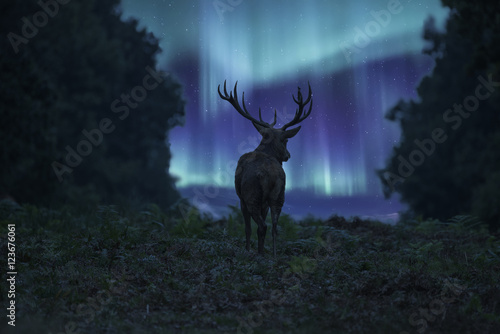 Fotografia, Obraz  Stunning landscape image of red deer stag silhouetted against No