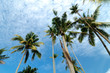 beautiful nature, coconut tree at tropical beach,cloudy blue sky
