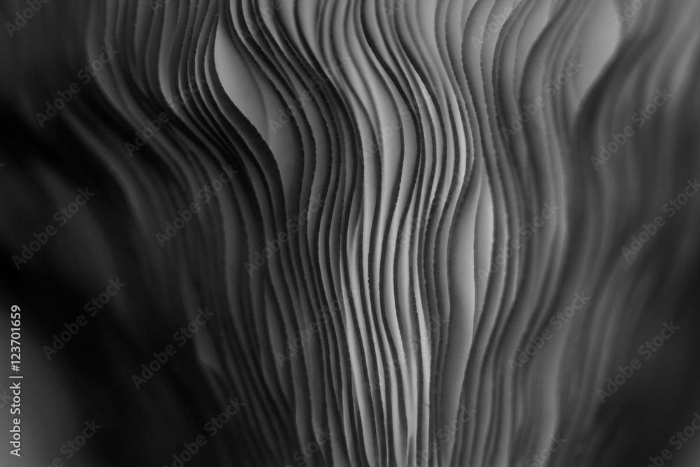 Fototapeta Close up of gills of a mushroom for abstract background