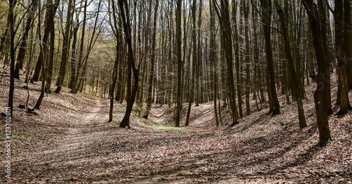 Foto auf Acrylglas Wald im Nebel Forest in autumn