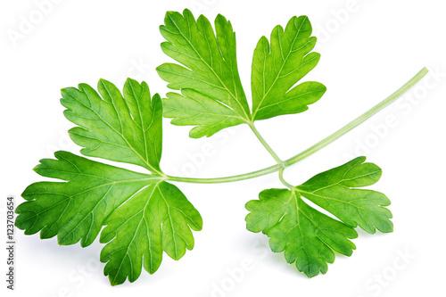 Fototapeta Garden parsley herb (coriander) leaf isolated on white background obraz
