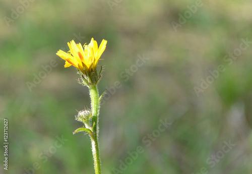 Fotografie, Obraz  Herbst in der Toskana, Blume, Abschied