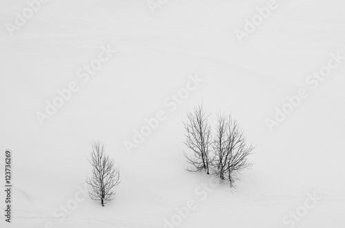 Papiers peints Blanc Des arbres dans la neige