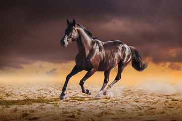 Black horse galloping on the sand on sky background