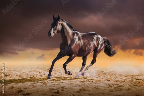Plakát  Black horse galloping on the sand on sky background