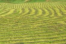 Rows Of Freshly Cut Grass