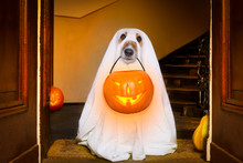 Halloween  Ghost  Dog Trick Or...