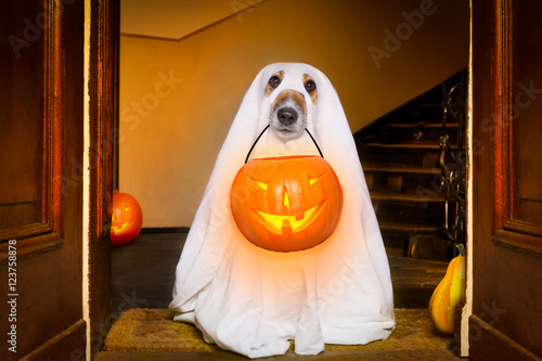Canvas Prints Crazy dog halloween ghost dog trick or treat