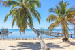 Typical landscape, of Key islands in Florida, United States, with palm trees, sea and wooden jetty in a sunny day. Summer vacation concept.