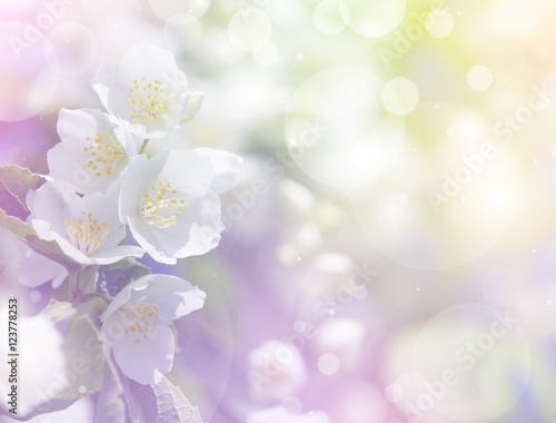 Spring gentle background with bright blooming jasmine Wallpaper Mural