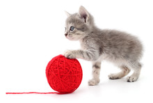 Kitten With Ball Of Yarn.