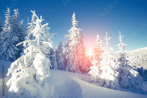 majestatyczny-zimowy-krajobraz