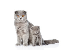 Mother Cat Little And Kitten Sitting Together. Isolated On White