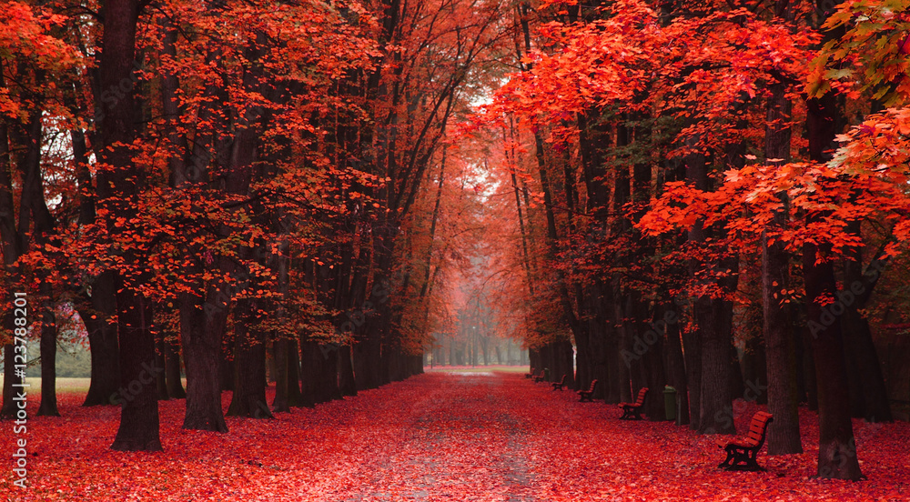 Fototapety, obrazy: easy way in the autumn park