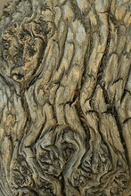 The Old Tree Bark
