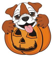 Face, Paws, Tongue, Peek Up, Halloween, Pumpkin, October, Holiday, Tongue, Dog, Animal, Pet, Puppy, Cartoon, White, Brown, Bulldog, English, English Bulldog, England, British,