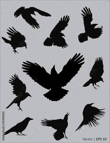 Valokuvatapetti Collection of a black raven silhouettes in action