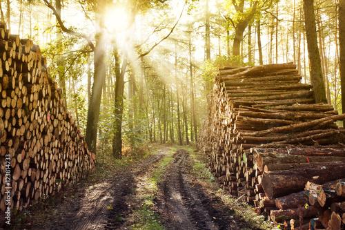 Waldweg mit Baumschlag © artfocus